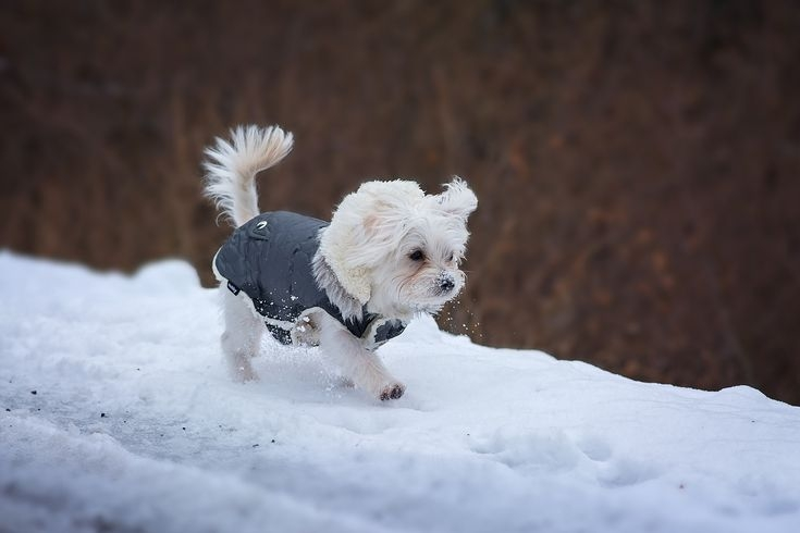 Cool how to sew a warm weatherproof dog coat 10 Modern Quilted Dog Coat Pattern Gallery