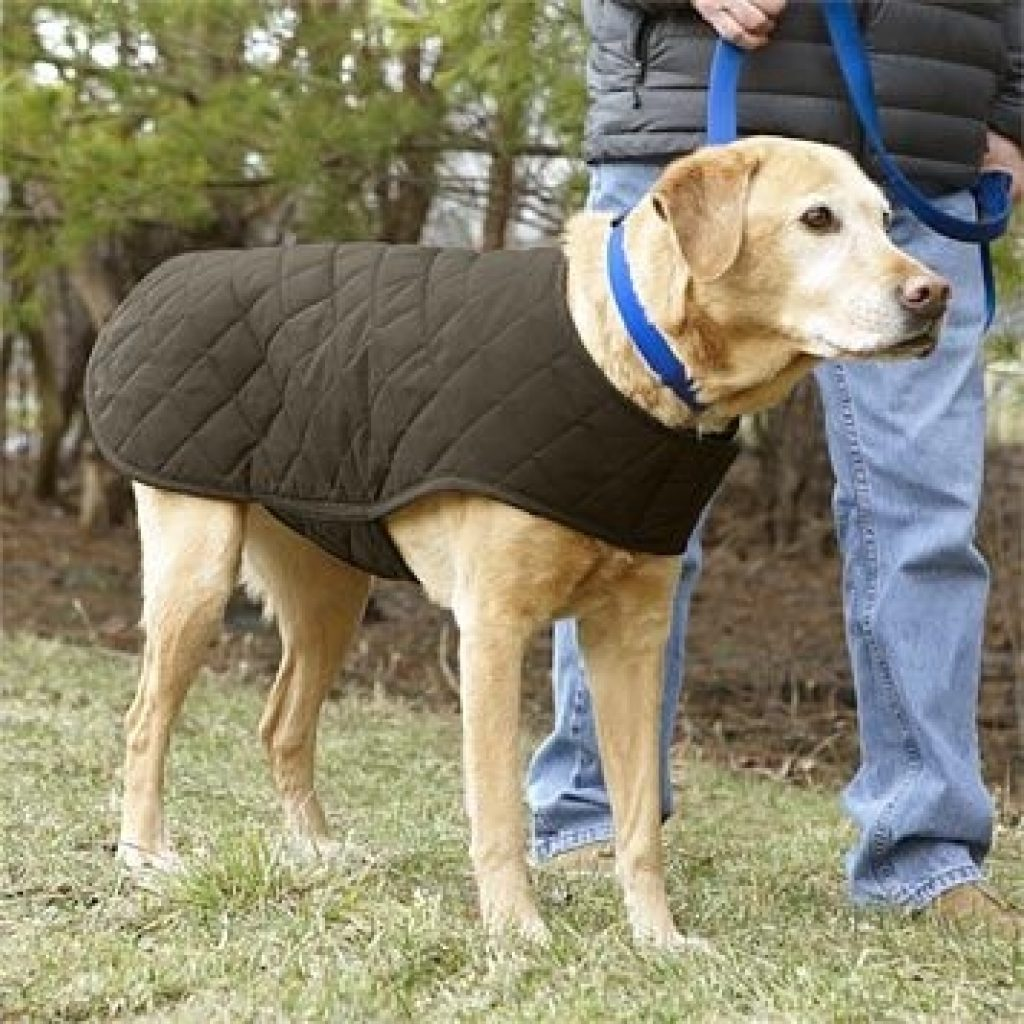 Cozy quilted waxed cotton dog jacket dog jacket dog coats dog 10 Modern Quilted Dog Coat Pattern Gallery