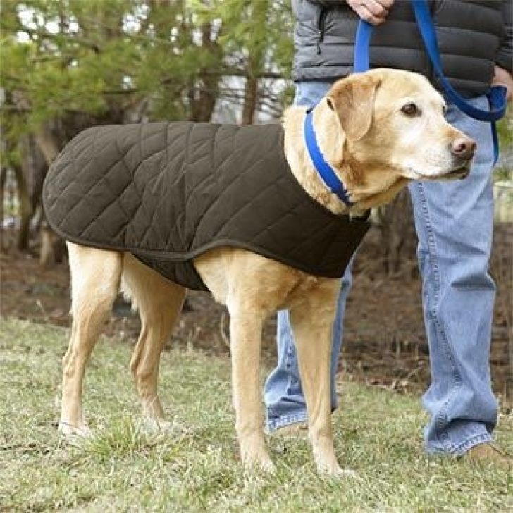 Permalink to 10 Modern Quilted Dog Coat Pattern Gallery