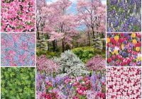 timeless treasures botanic garden projects inspiration Cool New Timeless Treasures Quilt Fabric Inspiration Gallery